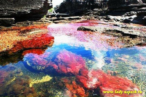 Каньо Кристалес - самая красивая река на нашей планете