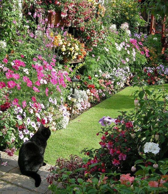 Самый красивый сад Edwina Fran