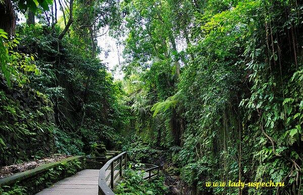 Сам лес обезян очень красивый много