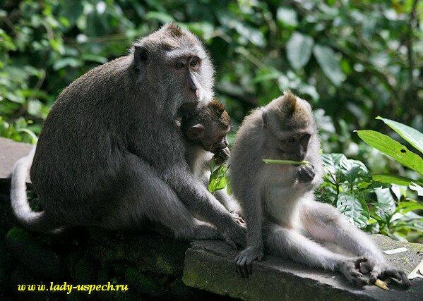 Лес обезьян в Убуде (Monkey Forest)