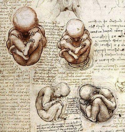 Леонардо да Винчи. Рисунки эмбриона человека.
