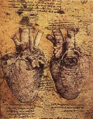 Леонардо да Винчи. Рисунок сердца человека.