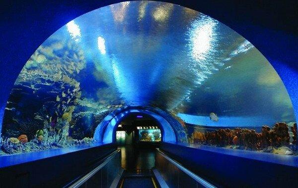 Пекинский акванариум