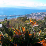 Вечная весна острова Мадейра