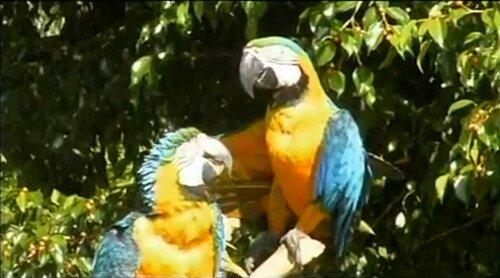 Манати парк Доминикана