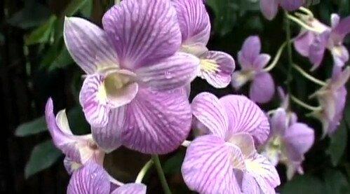 Сад Орхидей Сингапур