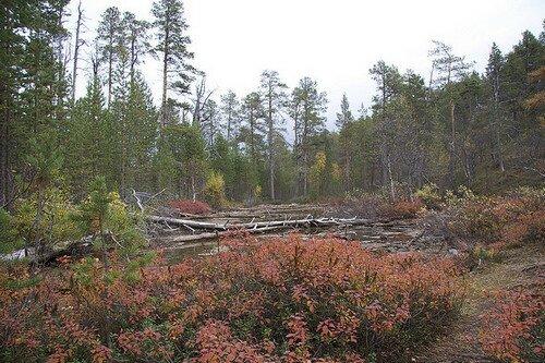 Национальный парк Лемменйоки