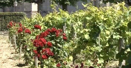 Винодельческий регион Бордо Франция
