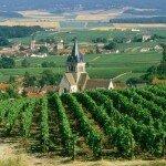 Путешествие в виноделие Франции. Винный тур в Бордо