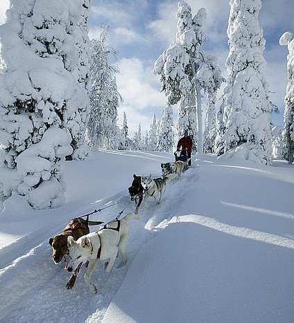 Хаска Лапландия Финляндия
