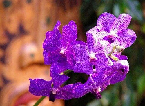 Международный фестиваль орхидей в Ментоне