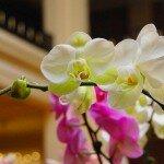 Фестиваль орхидей. Путешествие в страну красоты, экзотики и цветов