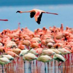Природные чудеса Кении и розовый рай фламинго