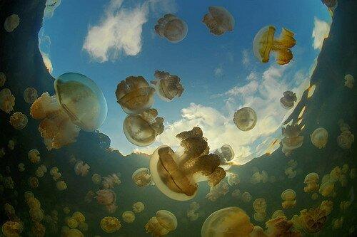Озеро медуз (Ongeim'l Tketau) в Палау