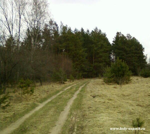 Весенняя природа Беларуси