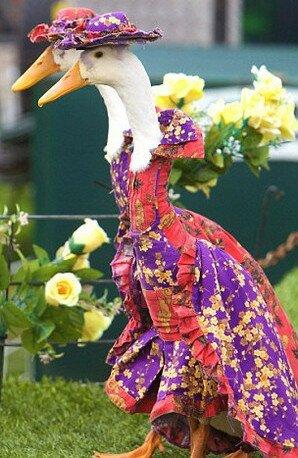 гусиный парад мод