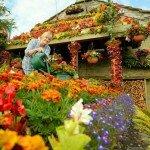 Цветочный дом — шедевр у дороги