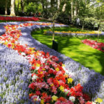 Чудо рождения весны в Парке Кекенхоф