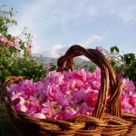 Долина Роз. Что может быть прекраснее?